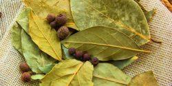خواص برگ بو ، ۷ مورد از خاصیت ها و مضرات ادویه برگ بو