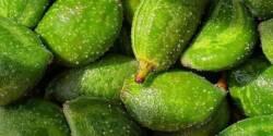 خواص چغاله بادام ، ۱۰ مورد از خاصیت ها و مضرات چاقاله بادام