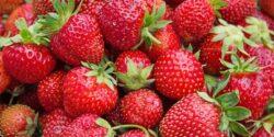 خواص توت فرنگی، ۱۲ مورد از خاصیت ها و مضرات توت فرنگی