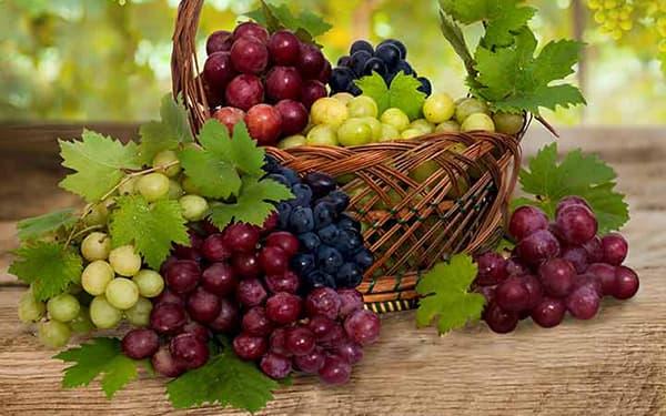 خواص انگور ناشتا برای پوستعسگری قرمزسیاه برای لاغری در طب سنتی مضرات انگور سبز یاقوتی در بارداری