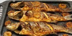 طرز تهیه خوراک ماهی قزل آلا
