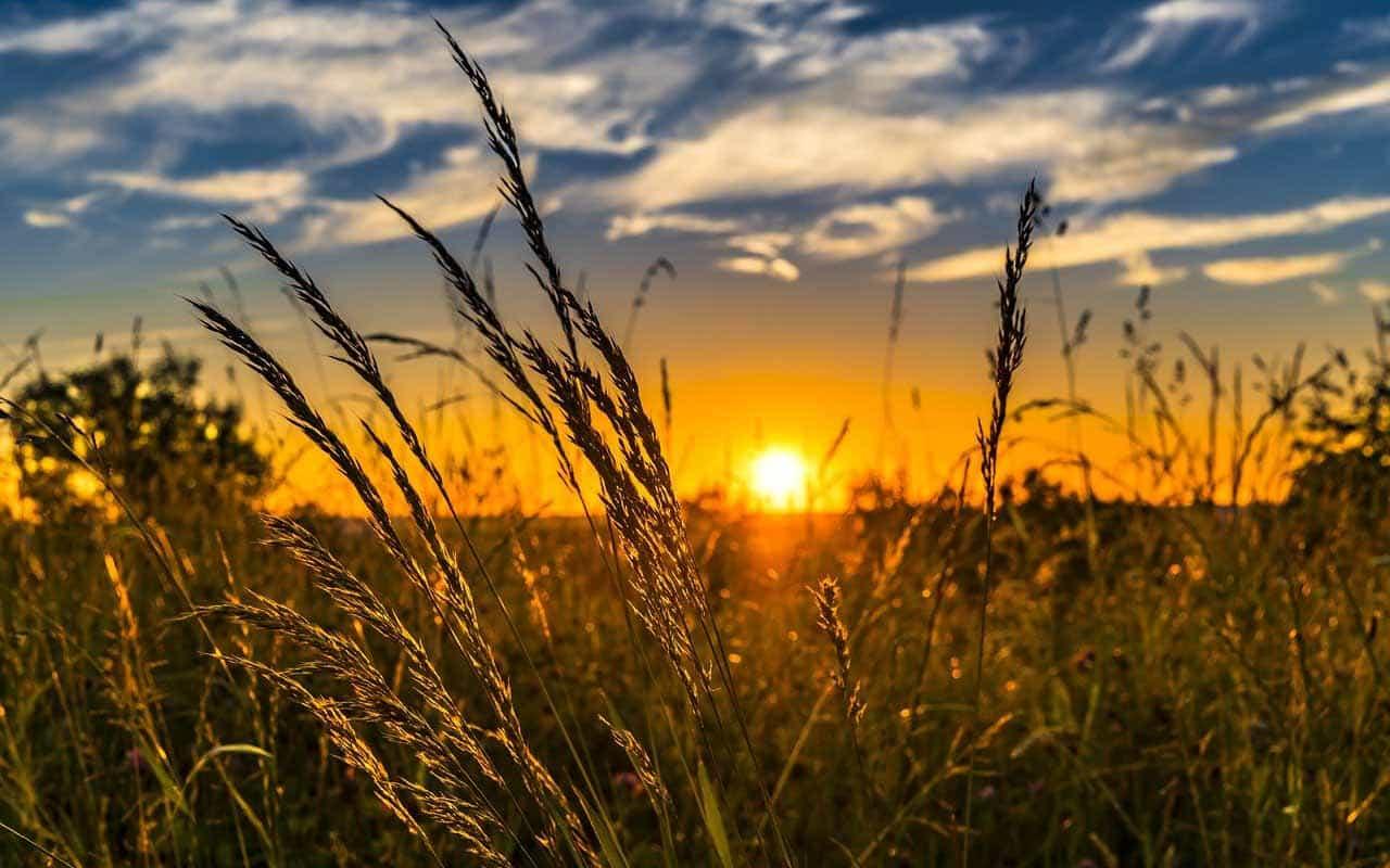 متن در مورد آفتاب پاییز متن در مورد آفتاب متن در مورد نور آفتاب متن ادبی در مورد آفتاب جملات انگلیسی در مورد آفتاب متن زیبا درباره آفتاب متن درباره نور و روشنایی متن در مورد آفتاب زیبا